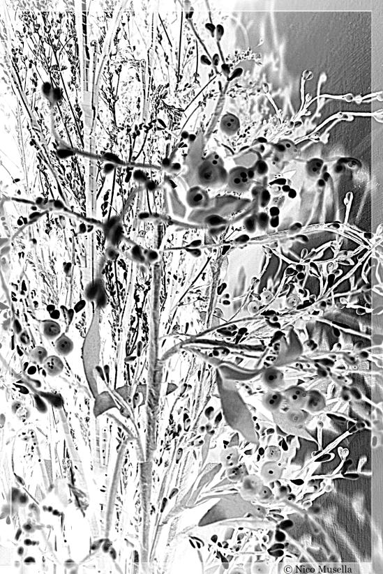 fiori di vetro 1
