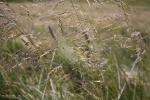 natura luoghi e persone nel sud della francia (11)